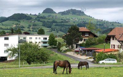 Landschaft als Leitthema für nachhaltige Regionalentwicklung – Analyse Musterbeispiele